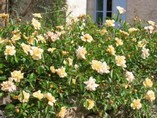 ROSE ON SELF CATERING LA CHESNAYE